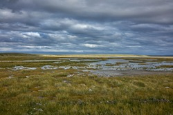 Grassy marshland in Patagonia, Argentina. Overcast sky and horizon above.