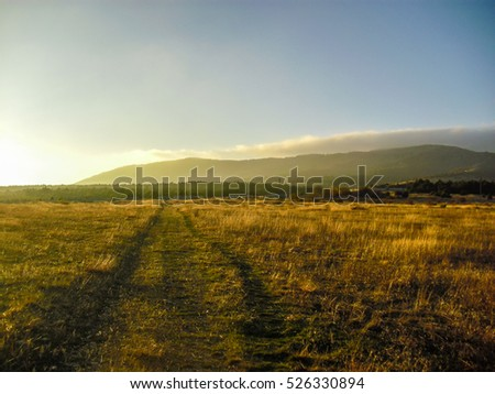 Grassy road to the forest. Sunset landscape. Dry grass field. #526330894