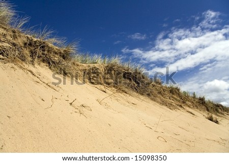 Grassy sand dune at the beach with dark blue sky and white clouds