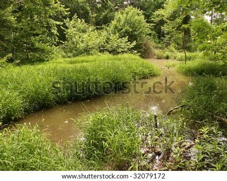 Grassy swamp land - stock photo