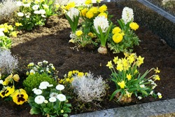 Grave on church yard in spring with spring flowers, copy space