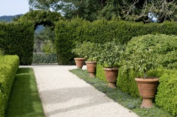 gravel garden walkway lined with potted plants, hedge with archway in the background, springtime