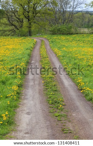 Gravel road in the farmland