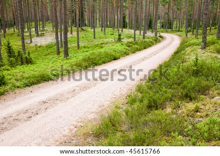 Gravel road in the forest