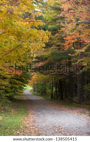 Gravel road leading through a canopy of trees, Stowe, Vermont, USA #138505415