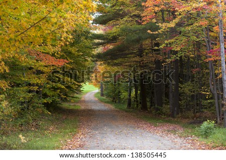 Gravel road leading through a canopy of trees, Stowe, Vermont, USA #138505445