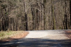 Gravel road leading toward a turnoff road and a line of trees