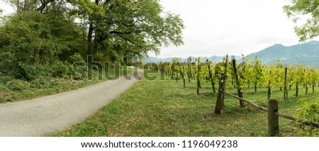 gravel road running through forest landscape and grapevines in a vineyard with a view of Rhine Valley mountain landscape in Switzerland