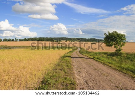 Gravel road through a rural landscape of cornfields