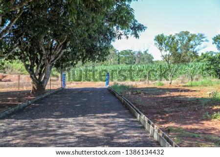 gravel, stones, a gate, blue iron gate, property entrance, cornfield, corn plantation, rural road, rural landscape, agribusiness, fertile soil, natural forest.  #1386134432