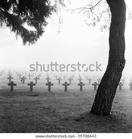 graveyard with rows of crosses and trees in the autumn mist monochrome film grain fog misty spooky and scary war cemetery