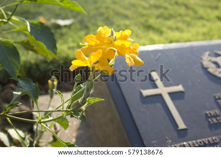 graveyard with yellow flowers