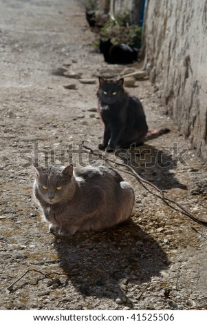 Gray and black cats sitting on the ground.