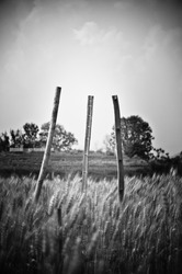 gray bamboo sad motion