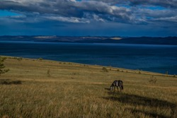 gray brown horse graze on the grass, bay of blue lake baikal, in the light of sunset, against the background of mountains and clouds