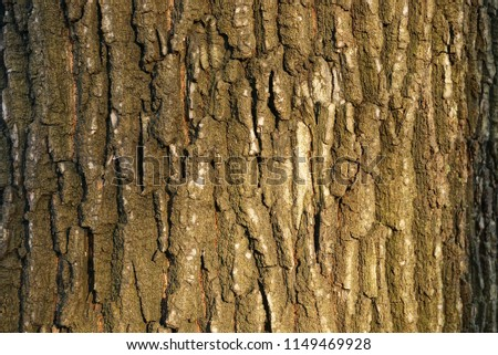 gray brown wood texture from bark of a tree #1149469928