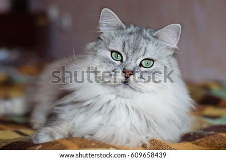 Stock Photo Gray cat