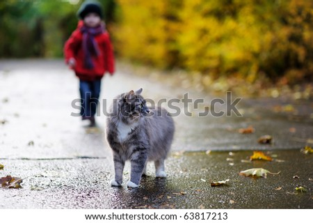 Gray cat and a child on beautiful autumn day