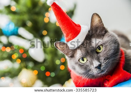 gray cat in Christmas hat on the background of Christmas tree