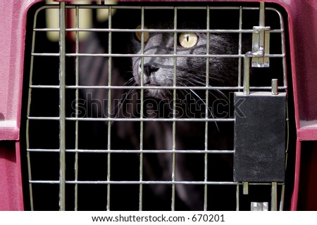 Gray cat in crate or cage outdoors.