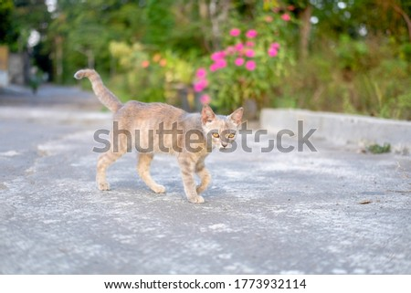 gray cat is walking on natural background