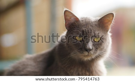 Gray cat makes a beautiful person #795414763
