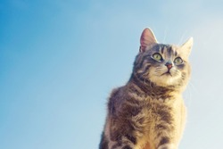 gray cat on a blue background in sunlight. cat in the sky. a pet. beautiful kitten. place for text