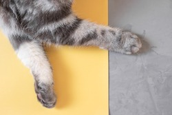 Gray cat paws on a yellow-gray background. Top view, copy space. Pet care concept. Trending colors.