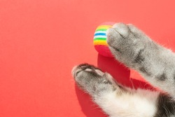 Gray cat paws with round little balls on a red background. The concept of toys for pets, games with cats. Copyspace, minimalism, top view.