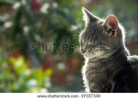 gray cat side view portrait in sunlight