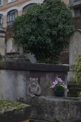 Gray cat sitting on a grave in Montmartre cemetery, Paris.