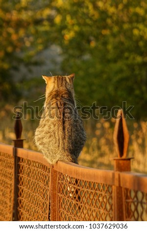 Stock Photo Gray cat sitting on an iron fence on the street