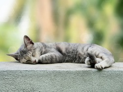 Gray cat sleeping on fence wall, Blurred bokeh background of tree garden.