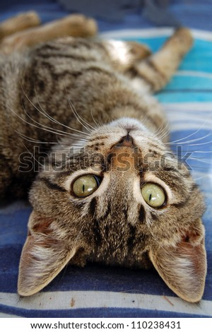 Gray cat with green eyes. Domestic animal portrait.