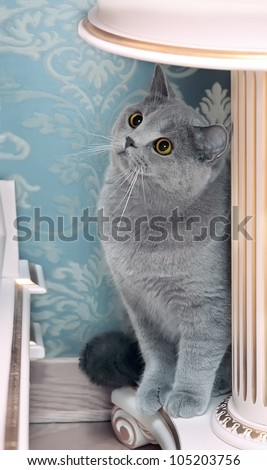 gray cat with red eyes sits on light furniture