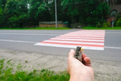 Gray chick in a human palm on the background of the road crossing. The chick opened its beak. Baby birds on the roadside. Road safety concept.