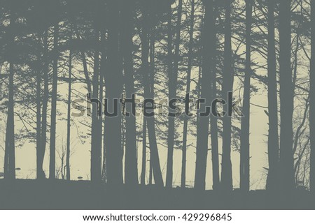 Gray colors silhouettes of trees at evening