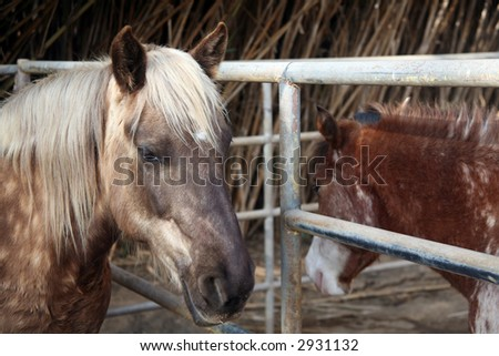 Gray dappled horse and chestnut colored pony