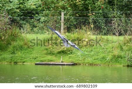 Gray flying egret #689802109