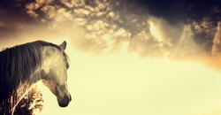 Gray horse portrait on Beautiful on sky background, banner
