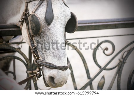 Gray horse with blinkers