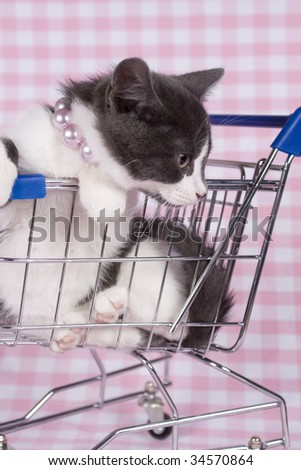 gray kitten in shopping car