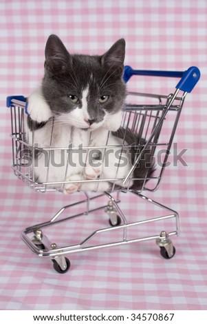 gray kitten in shopping car