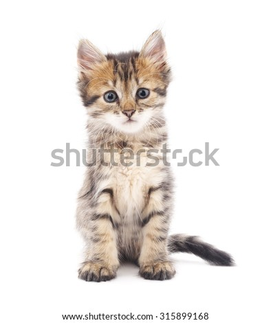 Gray kitten isolated on a white background. - Shutterstock ID 315899168
