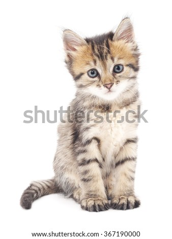 Gray kitten isolated on a white background. - Shutterstock ID 367190000