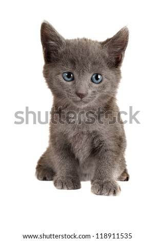Gray Kitten with Blue Eyes Sitting on White Background