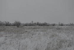 Gray landscape ft the gloomy winter day
