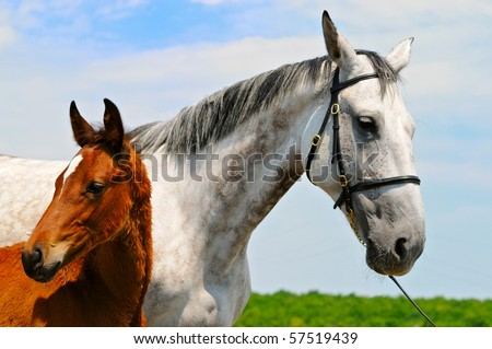 Gray mare and  bay foal on the background of blue sky