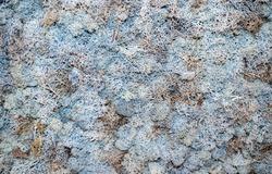 Gray moss texture. Floral wall in a natural organic interior. Urban environment concept.