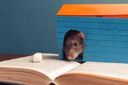 Gray mouse is sitting in the house on the book